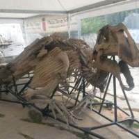 dinosauro laura