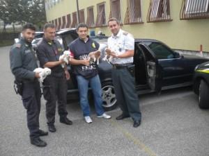 Cuccioli sequestrati da Guardia di Finanza al valico di Fernetti (Trieste)