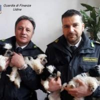 GDF cuccioli