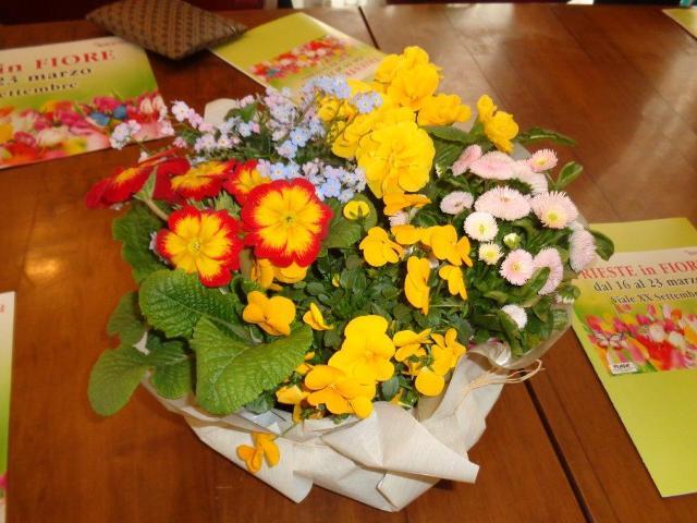 Trieste in fiore piante